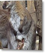 Momma And Baby Metal Print