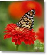 Monarch And Red Zinnia Metal Print
