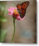 Monarch Beauty Metal Print