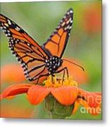 Monarch Butterfly Macro Metal Print