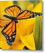 Monarch Butterfly On Flower Metal Print