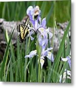 Butterfly On Iris Metal Print