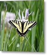 Butterfly On Iris Ser3 Metal Print