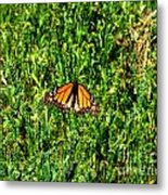 Monarch Butterfly Photograph Metal Print
