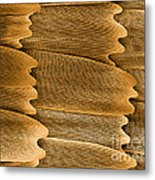 Monarch Butterfly Scales, Sem Metal Print