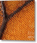 Monarch Butterfly Wing Scales Metal Print