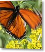 Monarch In Motion Metal Print