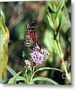 Monarch On The Wild Flowers Metal Print