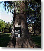 Money Tree . 7d9817 Metal Print by Wingsdomain Art and Photography