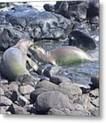 Monk Seals Metal Print