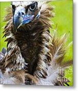 Monk Vulture 5 Metal Print