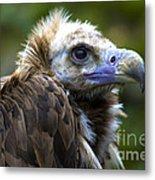 Monk Vulture Metal Print