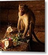 Monkey And Coconut Metal Print