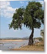 Monkey Bread Tree By The River Metal Print