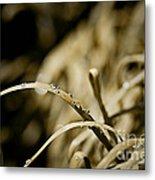 Monkey Grass Dewdew Metal Print