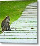 Monkey Mother With Baby Resting On A Walkway Metal Print