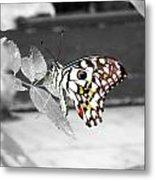 Monochromatic Butterfly Metal Print