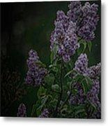 Mood Lilac Metal Print