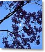 Moon Through Dogwood Metal Print