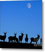 Moonlighting Metal Print