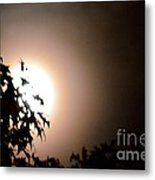 Moonlit Oak Metal Print