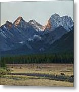 Moose Grazing At Sunset With Mountains Metal Print by Philippe Widling