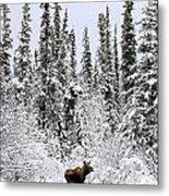 Moose In Deep Snow, Near Teslin, Yukon Metal Print