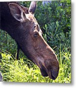 Moose Profile Metal Print