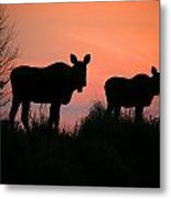 Moose Silhouetted At Sunset Metal Print