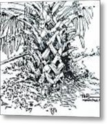 Morikami Gardens' Tree Boca Raton Florida  Metal Print