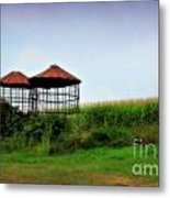 Morning Corn Metal Print