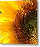 Morning Dew On Sunflower Metal Print