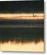 Morning Due Metal Print