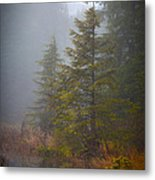 Morning Fall Colors Metal Print by Mike Reid