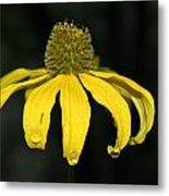 Morning Flower 2 Metal Print