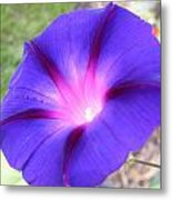 Morning Glory Fire Metal Print