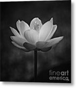 Morning Lotus Metal Print