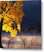 Morning Maple Ll Metal Print