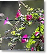 Morning Pink Metal Print