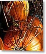 Morning Pumpkins Metal Print