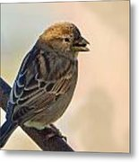 Morning Snack Metal Print