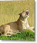 Morning Yawn Metal Print