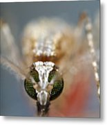 Mosquito Feeding Metal Print by Sinclair Stammers