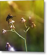 Mosquito Tiger Beefly Metal Print