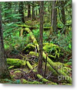 Moss And Fallen Trees In The Rainforest Of The Pacific Northwest Metal Print