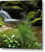Moss And Water And Ambience Metal Print