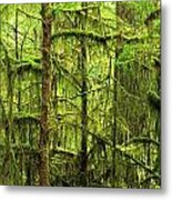Moss-covered Trees Metal Print