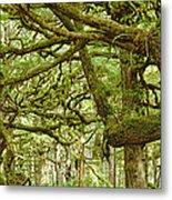 Moss-covered Trees Metal Print by David Nunuk