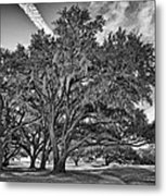 Moss-draped Live Oaks Metal Print