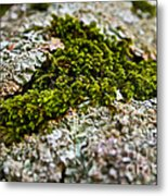 Moss In The Middle Metal Print